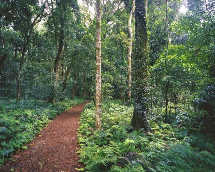 Муссонные леса: описание, климат, фауна и интересные факты