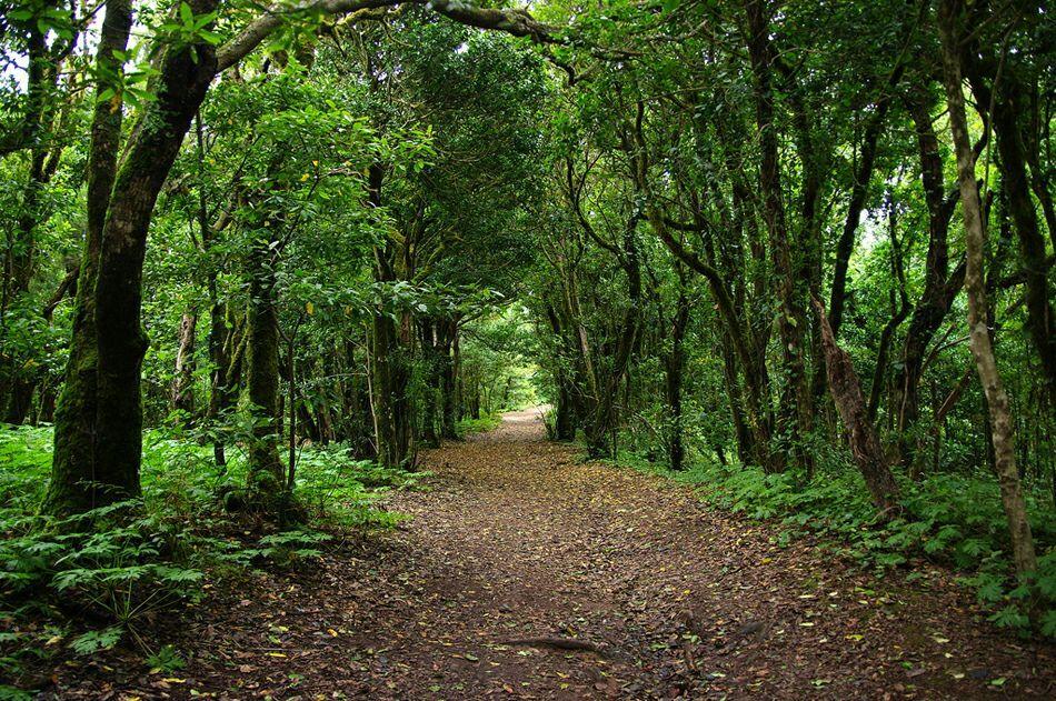Лиственный лес на Тенерифе