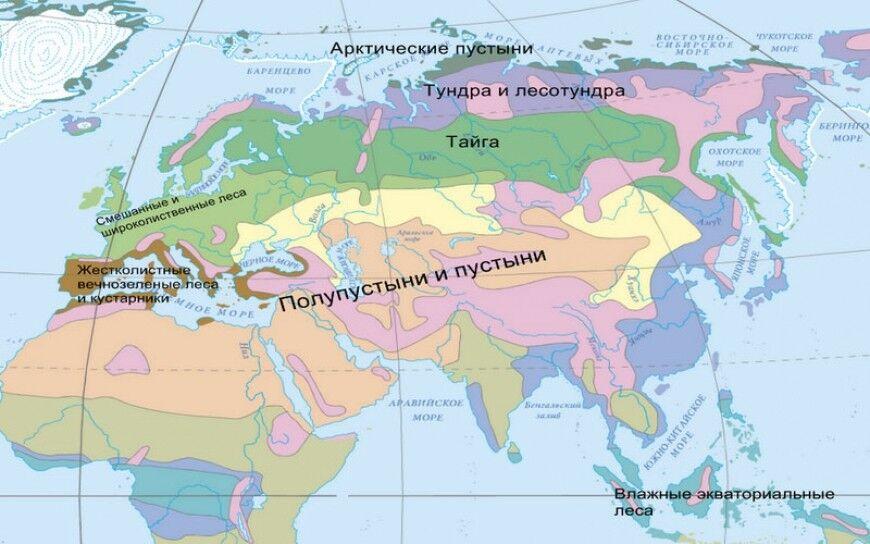 Природные зоны Евразии. Зоны арктического, субарктического ...