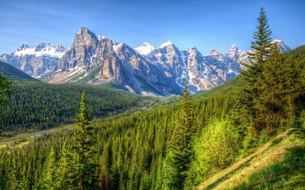 Картинка Горный лес » Лес » Природа » Картинки 24 - скачать картинки ...