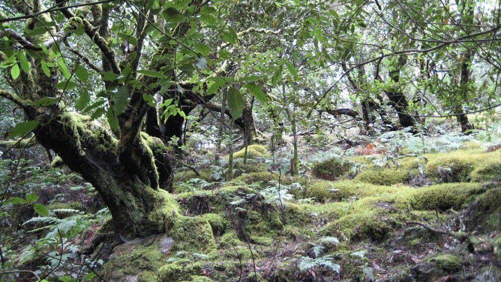 Субтропический лес — Википедия