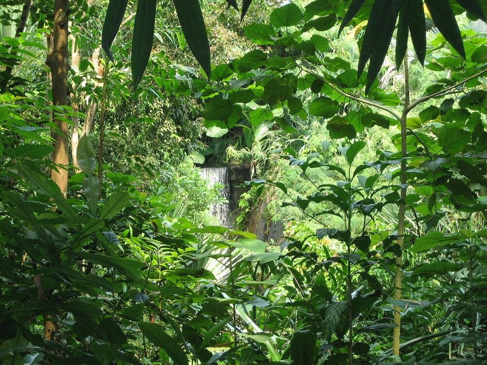 Влажные тропические леса Ацинананы — Википедия