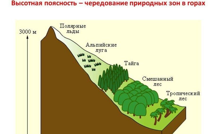 Презентация на тему: Высотная поясность тема «Географическая ...
