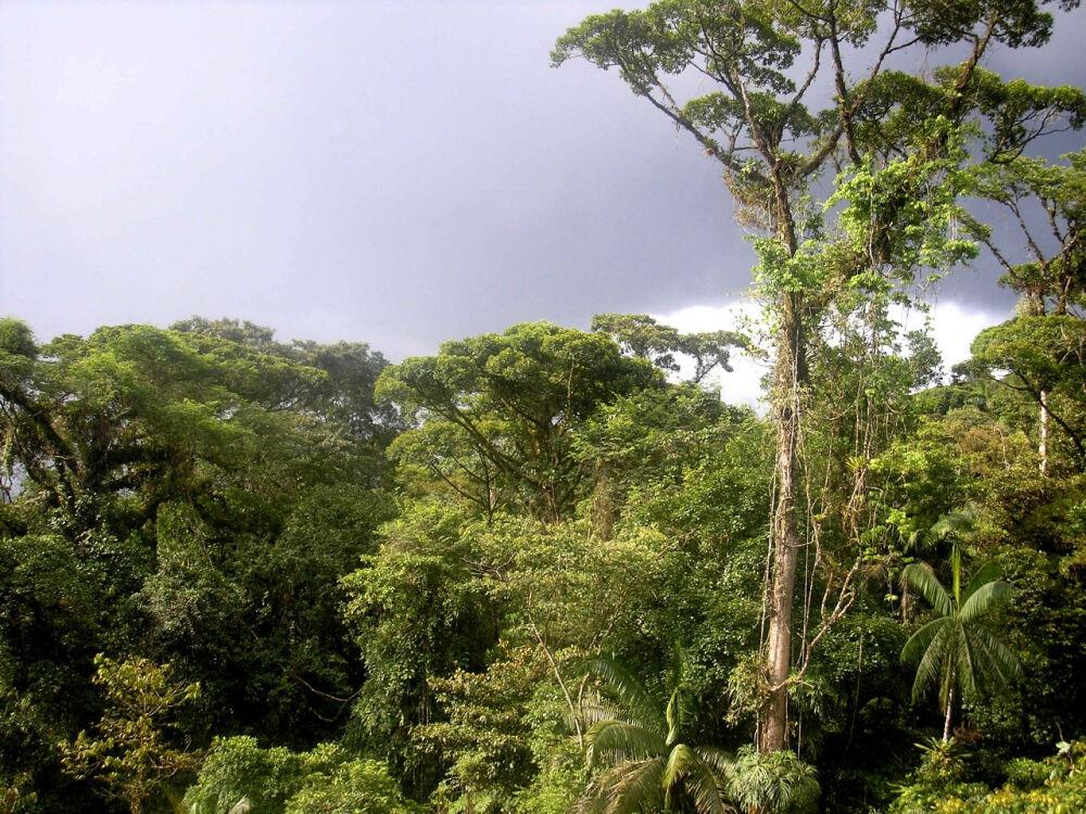 особенности экваториального пояса