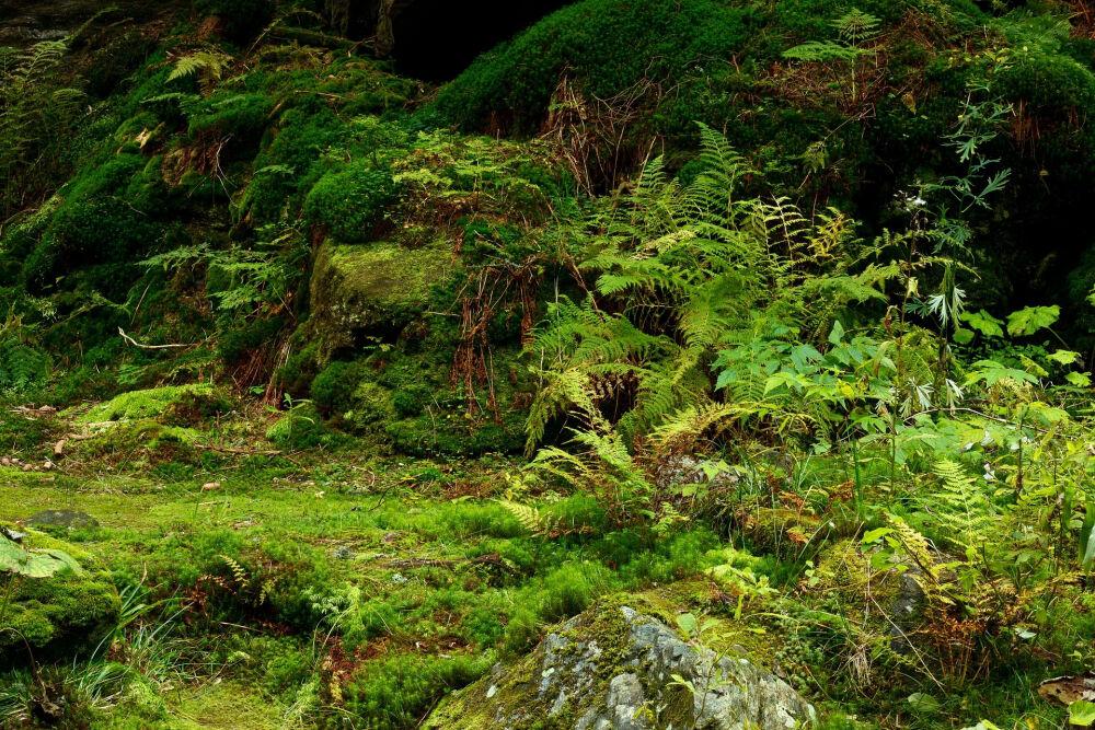 леса африки