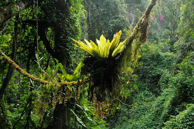 что такое влажные экваториальные леса (главный ключ)