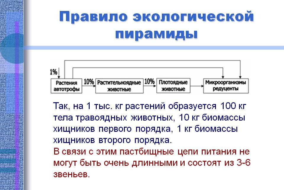 Правило экологической пирамиды - Презентация 14306-24
