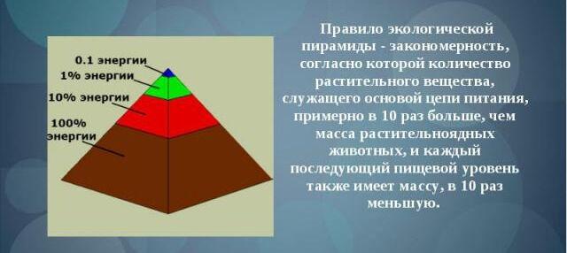 Презентация Экологические пирамиды - скачать презентации по Экологии