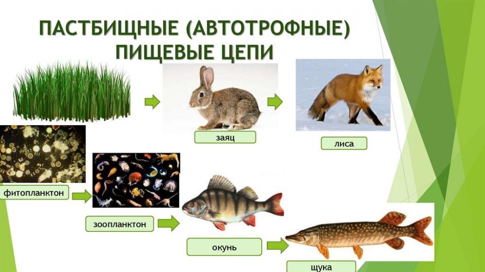 Структура экосистемы. Пищевые цепи и сети - презентация онлайн