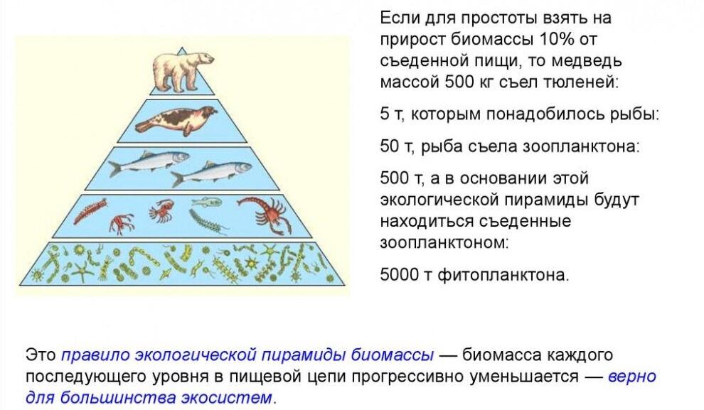 экологическая пирамида правило (главный ключ)