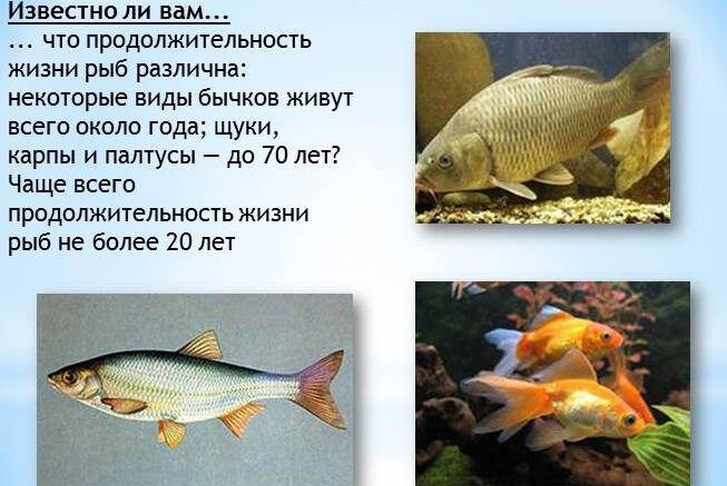 Презентация - Тип Хордовые Класс Рыбы