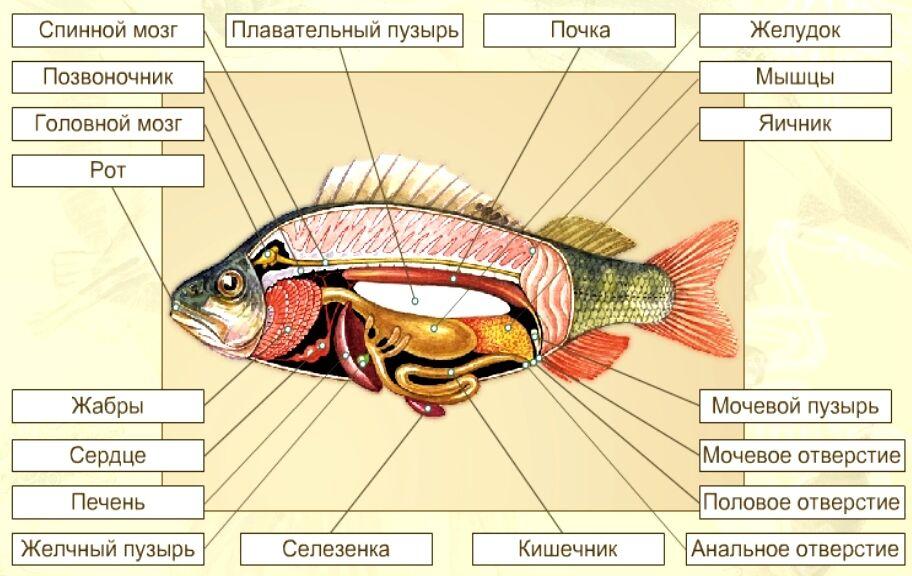 Конспект Группа Рыбы - УчительPRO