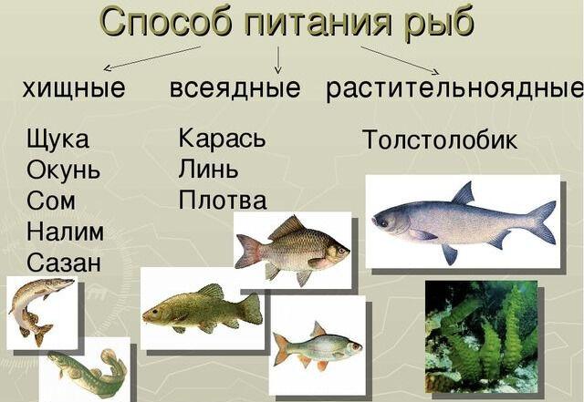 Презентация на тему Рыбы 2 класс по прогрмамме Перспективная ...