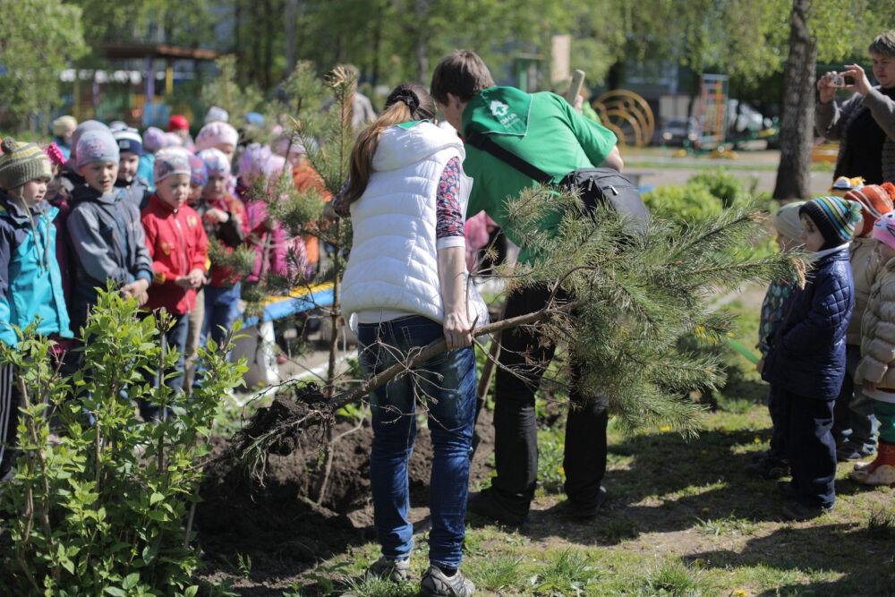 Национальный день посадки леса в Туле | Новости | Зеленое движение ...
