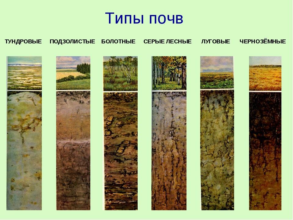 дерново подзолистые почвы характеристика
