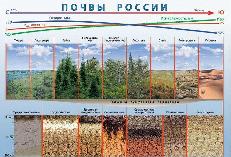 какие почвы подзолистые (главный ключ)