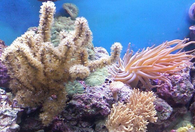 Описание кораллов, их виды, коралловые полипы » Живая Земля - все о ...