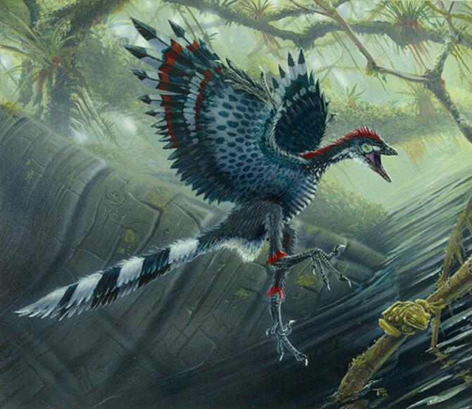 Ученые: древние птицы перья использовали для тепла, а не для полета