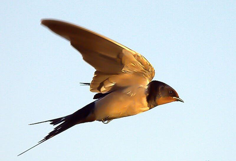 Полет птицы (Екатерина Мурзич) — Омилия