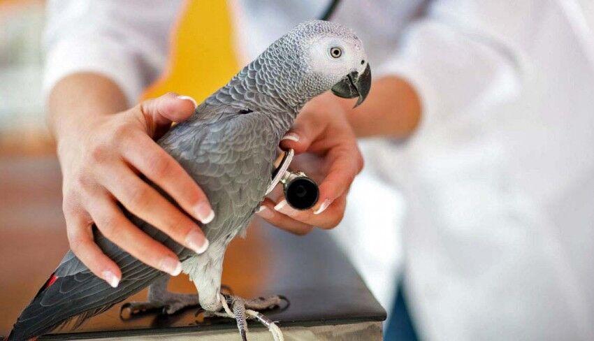 Лечение птиц в Москве: Проспект Мира, ВДНХ, Бабушкинская, Алексеевская
