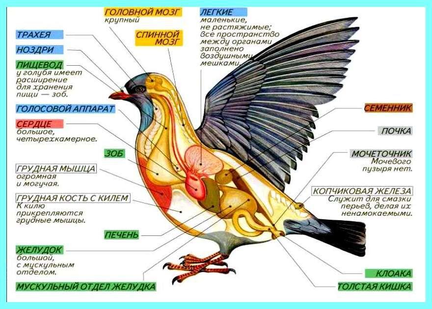 Конспект Птицы (Пернатые) - УчительPRO