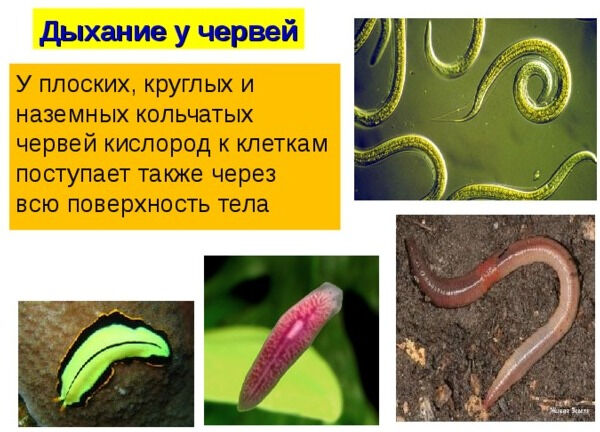 Методическая разработка к уроку биологии для 7 класса, УМК Пасечник ...
