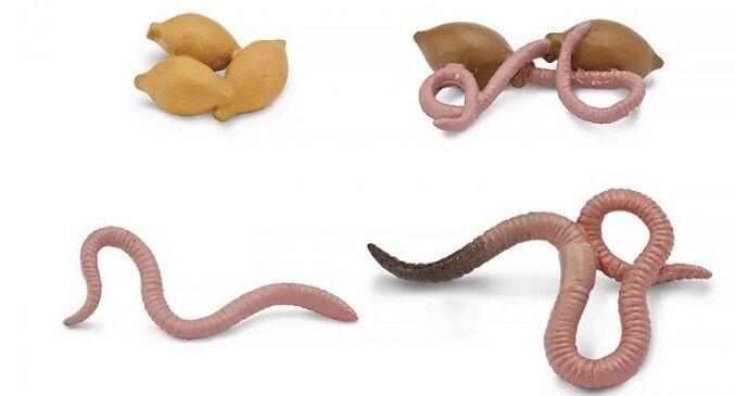 Safari Ltd. Набор Жизненный цикл дождевого червя - Акушерство.Ru