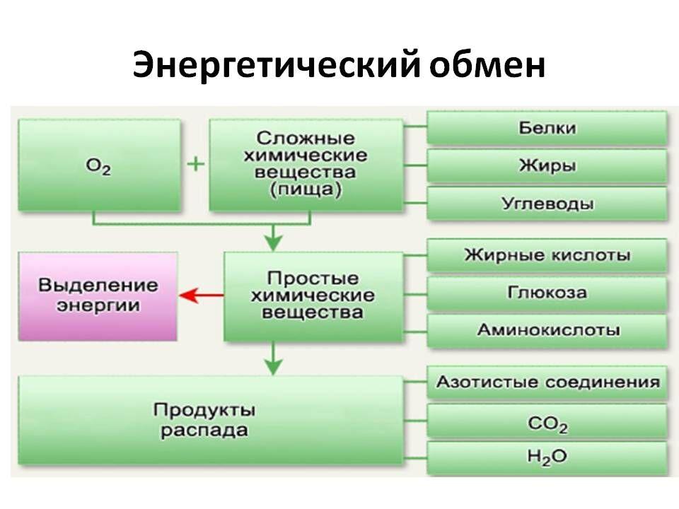 Обмен веществ и энергии. Полные уроки — Гипермаркет знаний