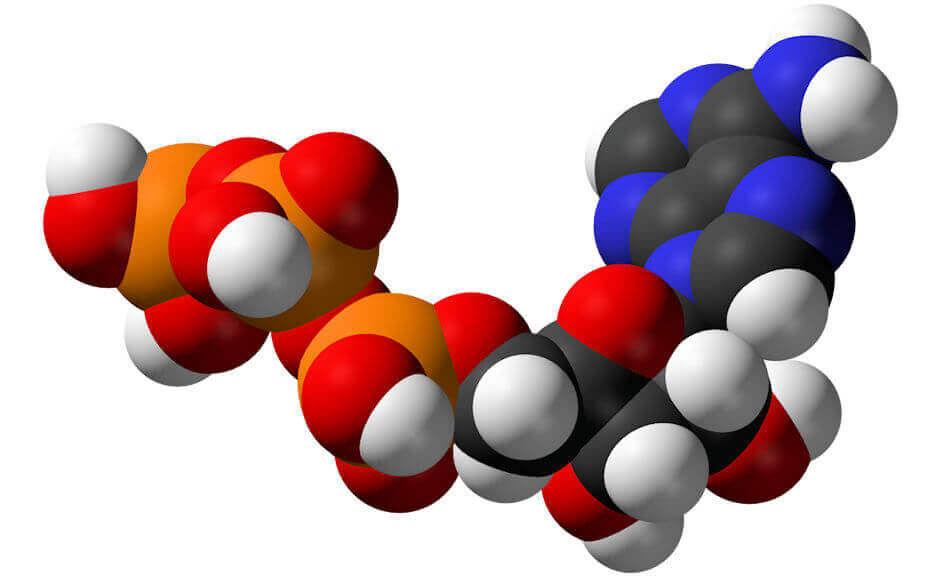 метаболизм веществ (главный ключ)