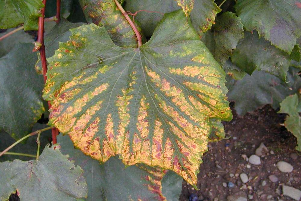 Как определить недостаток питательных веществ у растений по цвету ...