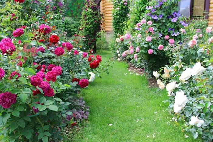 Клумба из роз своими руками. Советы по созданию, фото.
