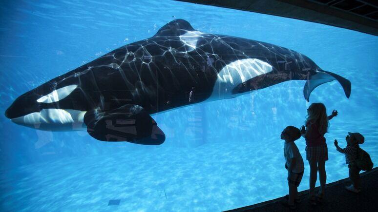 Bloomberg: «Синий кит» — это не только российская проблема — ИноТВ