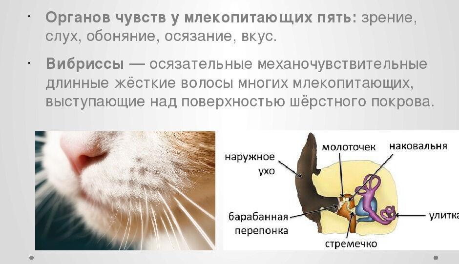 млекопитающие фото