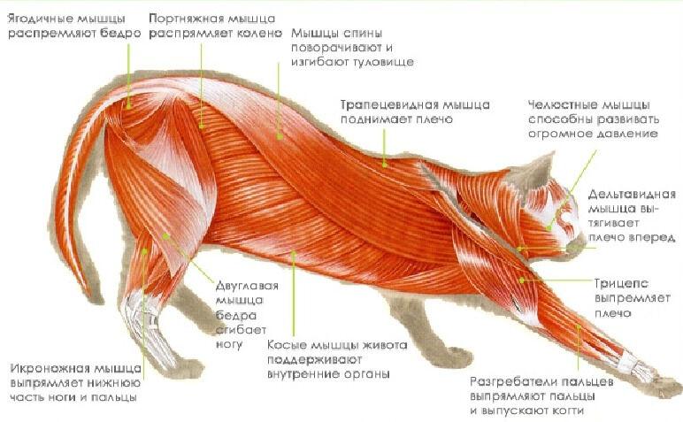 Презентация к уроку Класс Млекопитающие