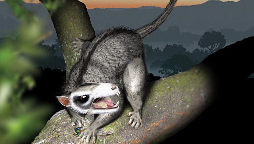 Бум эволюции среди млекопитающих начался до вымирания динозавров ...