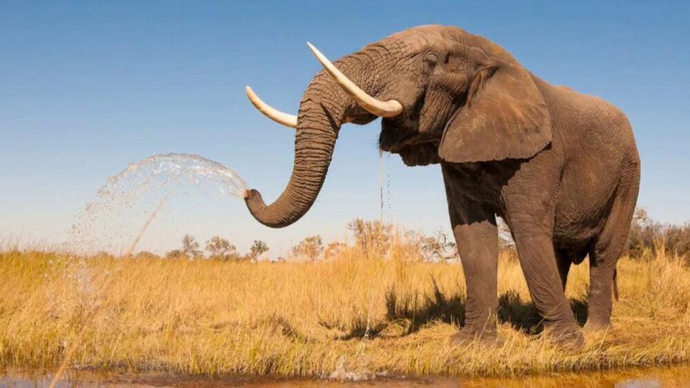 Африканский слон . - YouTube