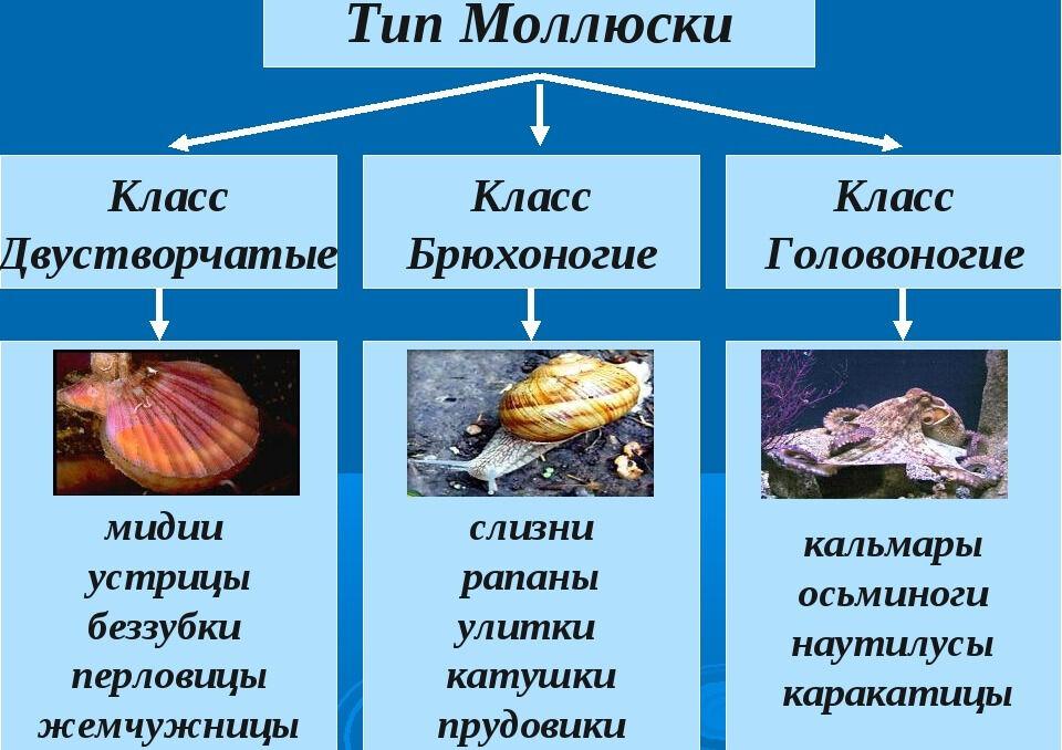 Презентация по биологии на тему