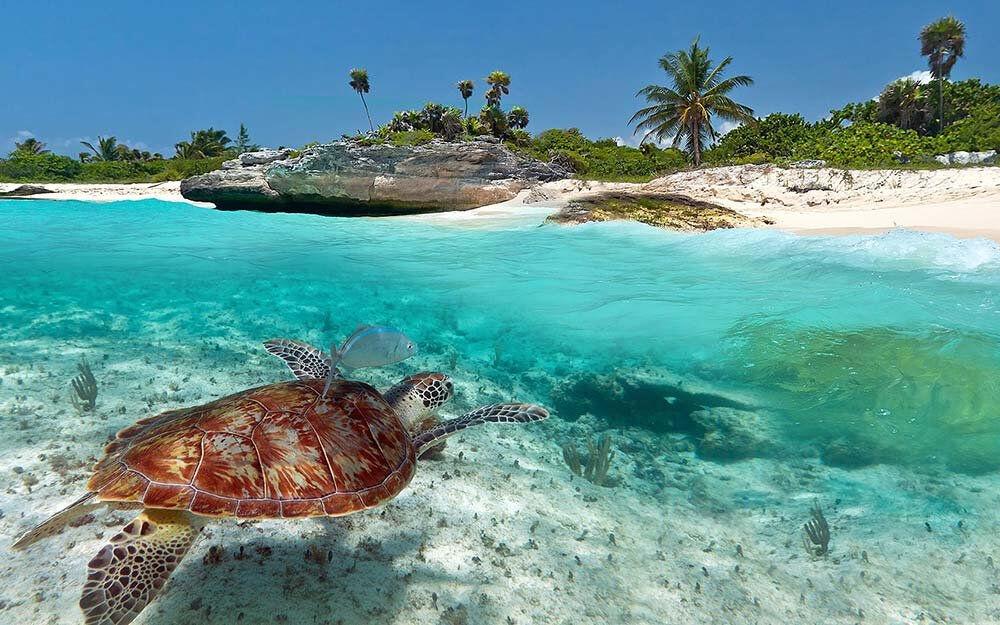 какие океаны омывают южную америку