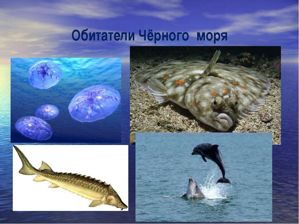 реки россии на карте с названиями