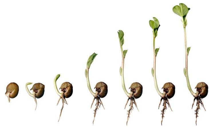 Вначале было семя: советы, как и где купить семена - Полезный журнал ...
