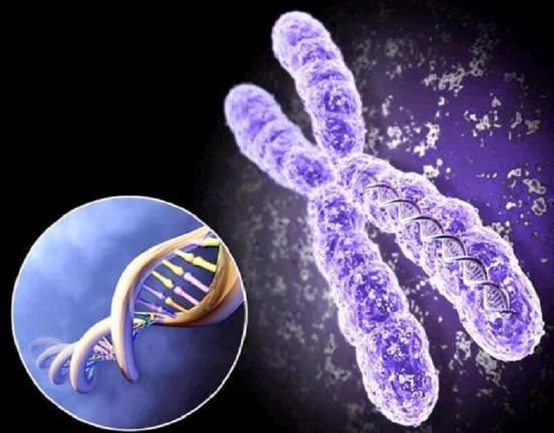 osnovy-genetiki-cheloveka-5