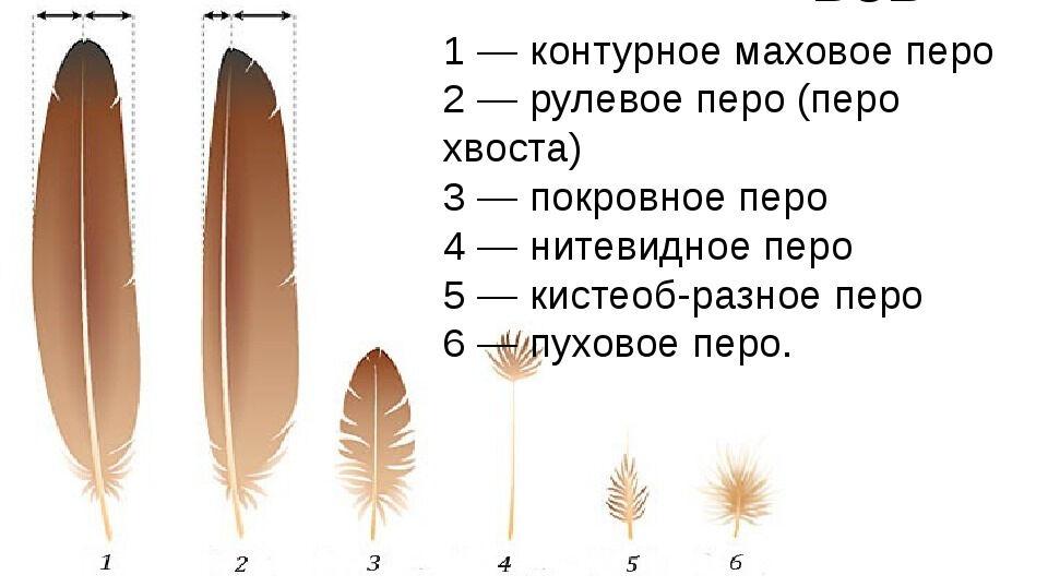 Презентация по биологии на тему Класс Птицы