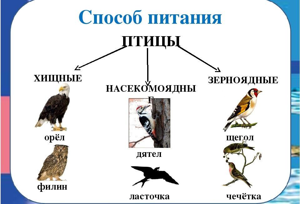 Презентация по окружающему миру на тему Птицы (2 класс)