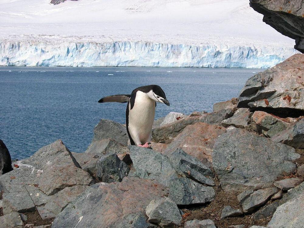 Остров Полумесяца - Южно Шетландские Острова - Антарктида