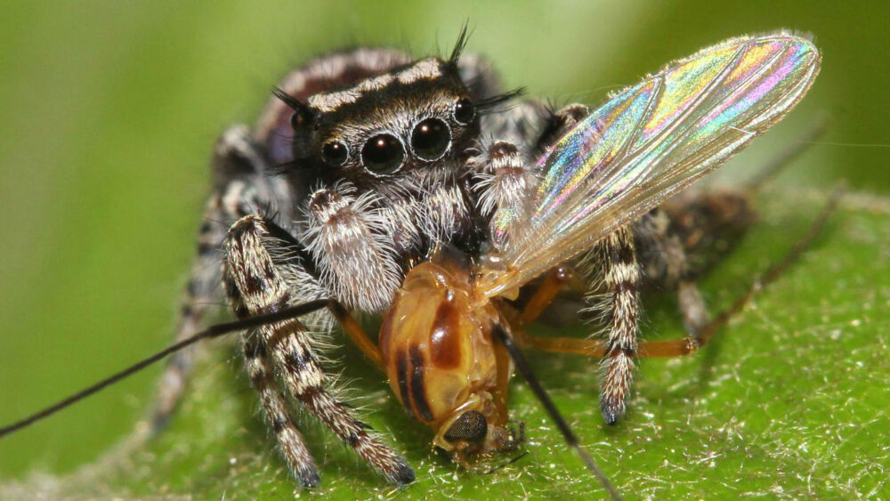 Пауки ежегодно съедают добычи в два раза больше массы всех взрослых ...