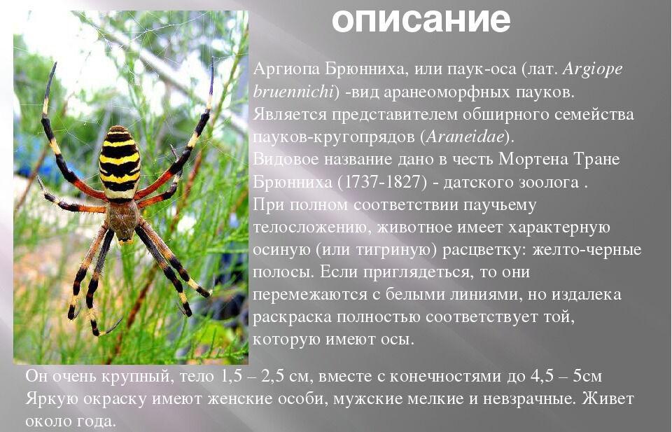 Исследовательский проект по экологии