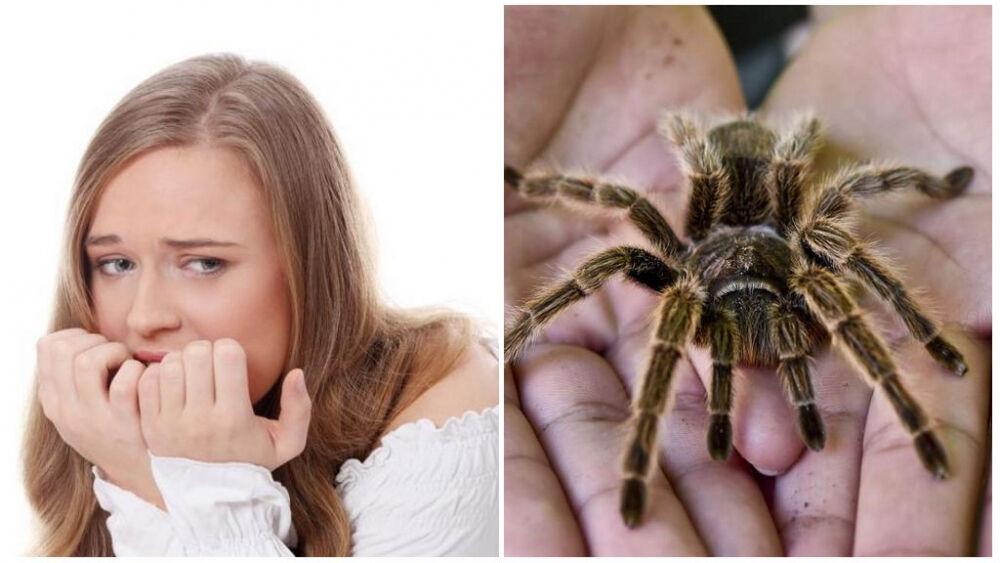 Боязнь пауков – как называется фобия и как от нее избавиться