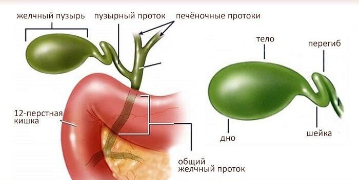 Симптомы перегиба желчного пузыря. Причины перегиба желчного пузыря ...
