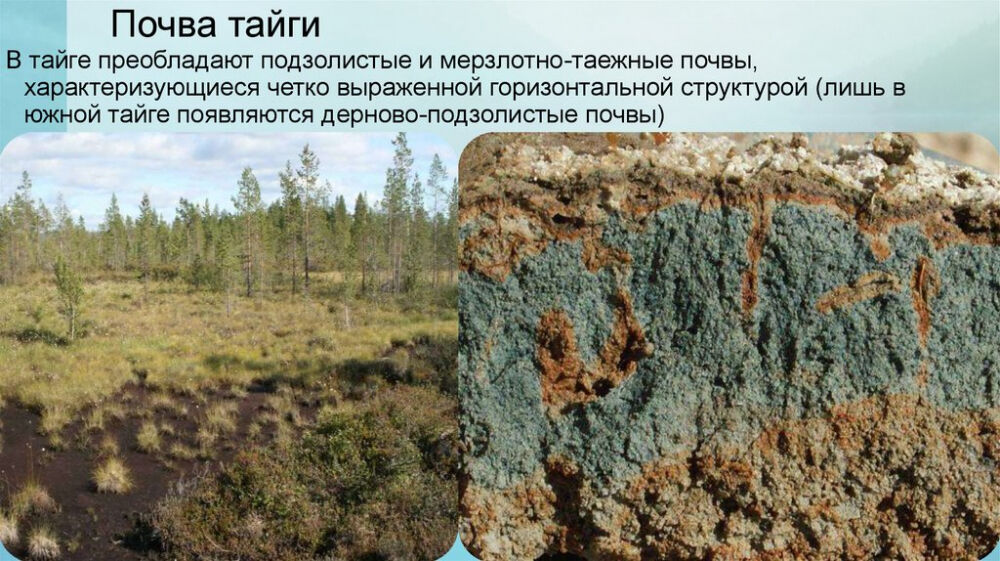 Природные зоны России - online presentation