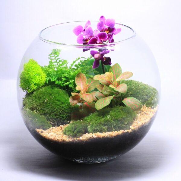 Как сделать флорариум своими руками (20 фото)
